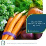 Zbiory warzyw sezonowa praca w Anglii od zaraz do grudnia 2020 w Farningham