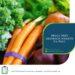 Praca przy zbiorach warzyw