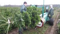 Leśnictwo sezonowa praca w Anglii bez języka od zaraz przy choinkach w Stockport 2020