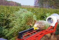 Od zaraz sezonowa praca w Anglii przy choinkach bez języka leśnictwo w Stockport UK