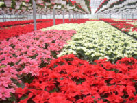 Ogrodnictwo sezonowa praca w Anglii od zaraz przy roślinach w szklarni z Hull UK 2021