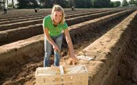 Bez języka oferta sezonowej pracy w Anglii zbiory szparagów od marca 2021 Exeter