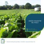 Zbiory warzyw sezonowa praca w Anglii od kwietnia 2021 w Farningham / Kent