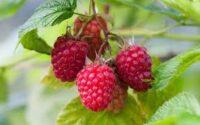 Od czerwca 2021 zbiory owoców Anglia praca sezonowa bez języka w Exeter UK
