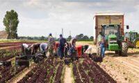 Sezonowa praca w Anglii na farmie w dla pary od maja 2021 w Kingsclere
