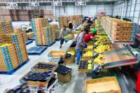 Oferta pracy w Anglii bez znajomości języka pakowanie owoców od zaraz Londyn